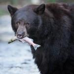 【マッサン】「命があったら、また逢うべ」熊虎は二度と余市へ帰って来ない?